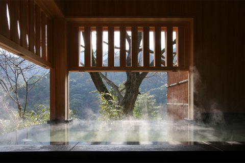 苔庵  2007