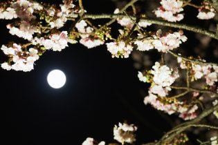 あたみ桜と満月の共演