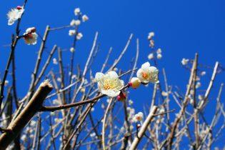 湯河原 梅を楽しむ季節