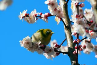 湯河原 春を告げる鳥