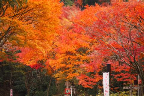 秋の奥湯河原